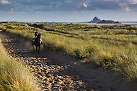 Europe/France/Normandie/Basse-Normandie/50/Baie du Mont-Saint-Michel/Env de Genêts:  Dunes de Dragey , entrainement des chevaux // Europe/France/Normandie/Basse-Normandie/ Bay of Mont Saint Michel, listed as World Heritage by UNESCO /Genêts: Dragey Dunes,  horse training
