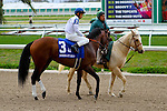 February 21, 2015: Majestic Harbor with Mike E Smith up in the Mineshaft Handicap at the New Orleans Fairgrounds Risen Star Stakes Day. Steve Dalmado/ESW/CSM