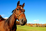 SPRING DALE FARM BENTON PA HORSES