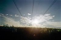 Campo di granoturco a Sedriano,  (ovest di Milano) --- Cornfield in Sedriano, (west of Milan)