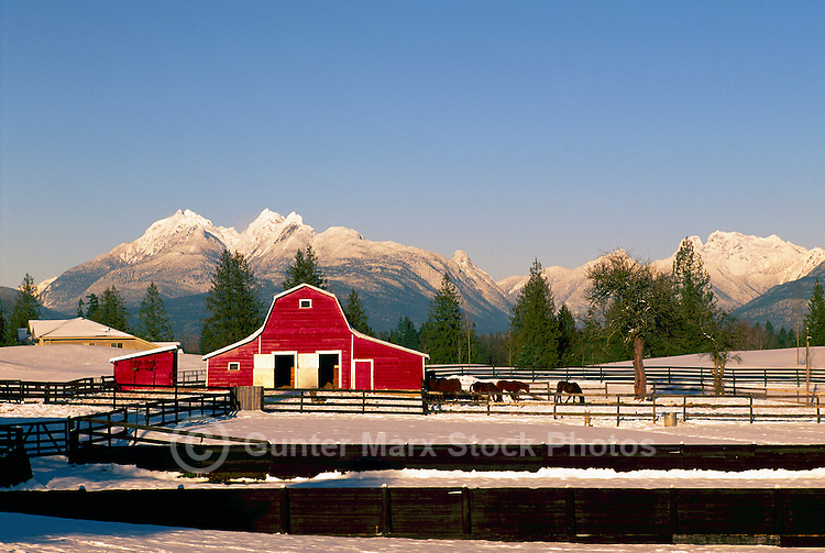 """Fraser Valley, Southwestern BC, British Columbia, Canada - Red Barn on Farm, Snow Capped """"Golden Ears"""" Mountains (Coast Mountains) in Golden Ears Provincial Park, Winter"""
