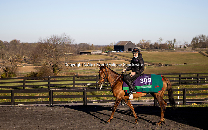 November 4, 2020: Tarnawa, trained by trainer Dermot K. Weld, exercises in preparation for the Breeders' Cup Turf at at Keeneland Racetrack in Lexington, Kentucky on November 4, 2020. Alex Evers/Eclipse Sportswire/Breeders Cup