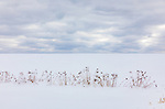 Stark winter landscape in northern Wisconsin.