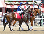 Brooklyn Bobby, sired by Frankel, steps on the track for his first race on August 06, 2016 during Whitney Stakes Day at Saratoga Race Course in Saratoga Springs, New York. (Bob Mayberger/Eclipse Sportswire)