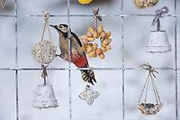 Buntspecht, Weibchen, Futtergitter für Vögel, Vogelfutter-Spalier, Vogelfutter-Gitter, Selbstgemachtes Vogelfutter, Vogelfütterung, Fütterung, Fettfuttermischung, Fettfutter, Meisenknödel, Erdnusskette, Erdnüsse, Erdnusskette, Erdnussring, Erdnuß, Vogelfutterspalier, Vogelfuttergitter, Winterfütterung, bird's feeding, Bunt-Specht Specht, Dendrocopos major, Great Spotted Woodpecker, female, Pic épeiche. Adventskalender für Vögel, Advent, Weihnachten für Vögel