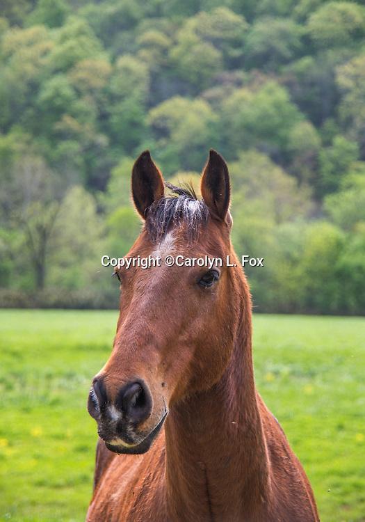 A horse stands in a field.