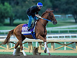 ARCADIA, CA - NOV 01: Gun Runner, owned by Winchell Thoroughbreds LLC & Three Chimneys Farm LLC and trained by Steven M. Asmussen, exercises in preparation for the Breeders' Cup Las Vegas Dirt Mile at Santa Anita Park on November 1, 2016 in Arcadia, California. (Photo by Zoe Metz/Eclipse Sportswire/Breeders Cup)