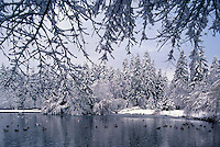 Central Park, Burnaby, BC, British Columbia, Canada - Snowfall after Winter Snow Storm