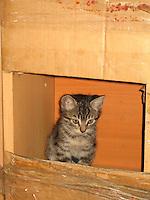 Spice Market Kitten
