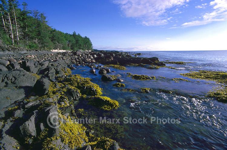 Haida Gwaii (Queen Charlotte Islands), Northern BC, British Columbia, Canada - Coastline at Low Tide, near Skidegate on Graham Island