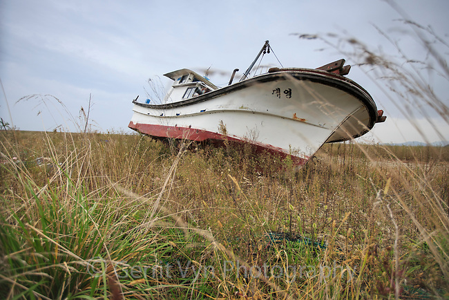 Grounded boat and weeds behind the 33 km long Saemangeum Seawall.This used to be  one of the most productive estuarine systems in the Yellow Sea and was critical migratory stopover habitat for the Spoon-billed Sandpiper and other migratory bird species. Saemangeum, South Korea. October.