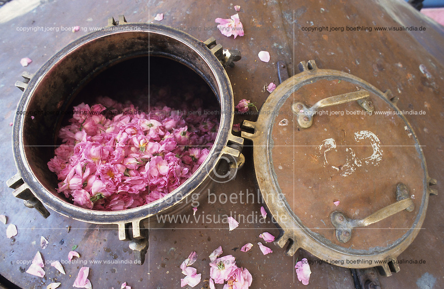 BULGARIA Kazanlak, damascena rose blossom in the rose valley , the rose blossom are distilled for essential oil and rose water which is used for cosmetics and perfume / BULGARIEN Kazanlak, Damscena Rose , aus den Rosenblaettern wird Rosenwasser und Rosenoel destilliert, die als Grundstoffe fuer Kosmetika und Parfuem verwendet wird - <br />