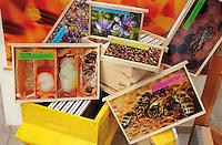 Honey Bees Educational Materials