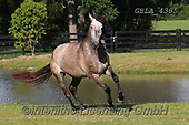 Bob, ANIMALS, REALISTISCHE TIERE, ANIMALES REALISTICOS, horses, photos+++++,GBLA4385,#a#, EVERYDAY
