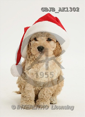 Kim, CHRISTMAS ANIMALS, photos(GBJBAK1302,#XA#) stickers