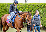 January 24, 2019: Accelerate walks to the track with Trainer John Sadler to exercise in preparation for the Pegasus World Cup Invitational on January 24, 2019 at Gulfstream Park in Hallandale Beach, Florida. Scott Serio/Eclipse Sportswire/CSM