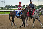 TORONT,CANADA-SEP 15: Proven Strategies is before the Summer Stakes at Woodbine Race Track on September 15,2019 in Toronto,Ontario,Canada. Kaz Ishida/Eclipse Sportswire/CSM