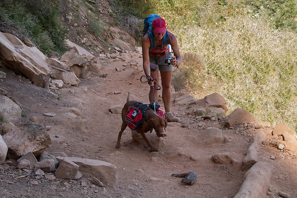 Backpacker with service dog on the Bright Angel Trail above Indian Gardens, Grand Canyon National Park, Arizona .  John offers private photo tours in Denver, Boulder and throughout Colorado. Year-round. . John offers private photo tours in Grand Canyon National Park and throughout Arizona, Utah and Colorado. Year-round.
