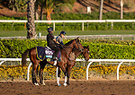 OCT 29: Breeders' Cup Juvenile Turf entrant Decorated Invader, trained by Christophe Clement, gallops at Santa Anita Park in Arcadia, California on Oct 29, 2019. Evers/Eclipse Sportswire/Breeders' Cup