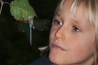 Kind, Junge betrachtet, beobachtet Herbst-Mosaikjungfer, Männchen, Herbstmosaikjungfer, Mosaikjungfer, Aeshna mixta, Aeschna mixta, Migrant Hawker