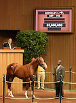 13 September 2010.  Hip #116 Distorted Humor - Angel's Nest colt sold for $2,050,000 at the Keeneland September Yearling Sale.   Consigned by Lane's End.
