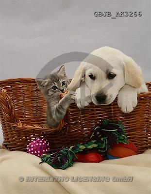 Kim, ANIMALS, dogs, photos(GBJBAK3266,#A#) Hunde, perros