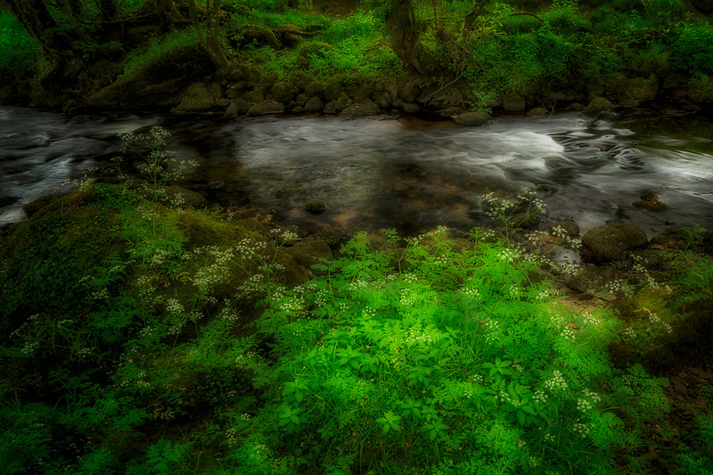 View along Teign River with wildflowers. Dartmoor National Park, England