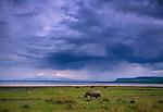 Wildlife, Lake Nakuru National Park, Kenya