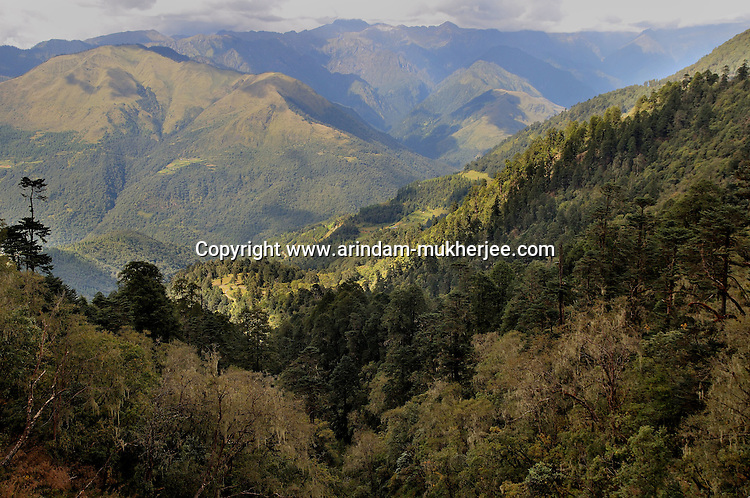 A valley covered with forrest on the way to Trongsha in central Bhutan. Arindam Mukherjee..
