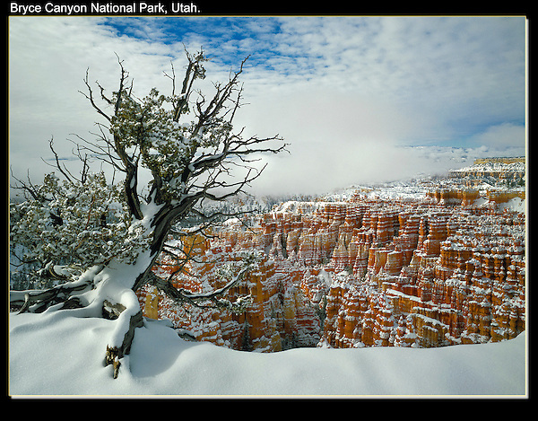 Snow is common in this high park.<br /> Juniper framing Bryce Canyon National Park, Utah.