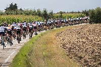 peloton over cobbled section<br /> <br /> Dwars door het Hageland (1.1)<br /> 1 Day Race: Aarschot > Diest (194km)