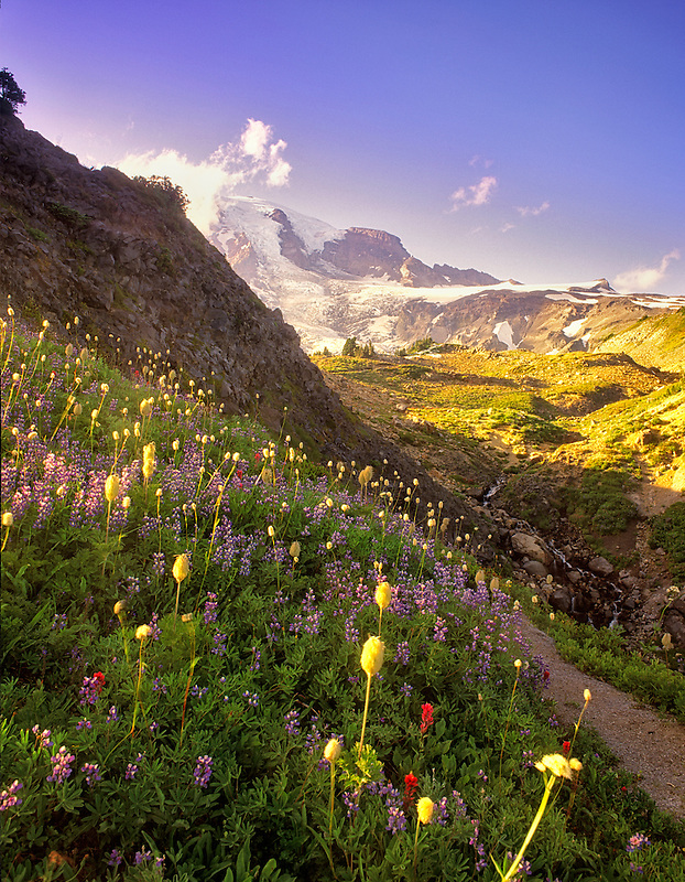 Wildflowers and Mount Rainier National Park, Washington.