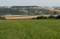 20-7-2021 Field Margin In Rutland <br /> ©Tim Scrivener Photographer 07850 303986<br />      ....Covering Agriculture In The UK....