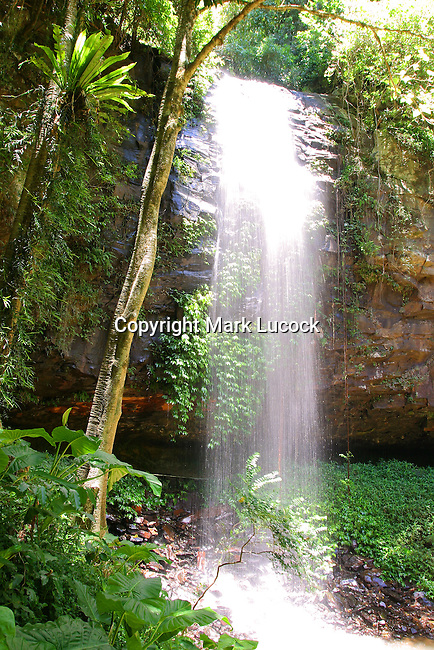 Crystal Shower Falls, Dorrigo National Park, NSW