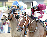 Untapable (no. 8), ridden by Rosie Napravnik and trained by Steve Asmussen, wins the 45th running of the grade 1 Cotillion Stakes for three year old fillies on September 20, 2014 at Parx Racing in Bensalem, Pennsylvania.  (Bob Mayberger/Eclipse Sportswire)