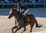 January 23, 2021:  #6 Pacific Gale, with jockey John Velazquez on board, wins the Inside Information Stakes GII   at Gulfstream Park in Hallandale Beach, Florida.  Liz Lamont/Eclipse Sportswire/CSM