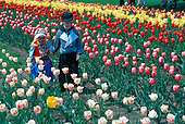 Dutch children in Holland Michigan during the Tulip Festival