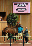 September 10, 2014: Hip #460 Bernardini - Ava Knowsthecode colt consigned by Valkyre Stud sold for $575,000 at the Keeneland September Yearling Sale.   Candice Chavez/ESW/CSM