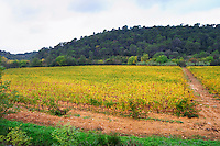 Mas de Perry, Mas Nicot. Terrasses de Larzac. Languedoc. France. Europe. Vineyard.