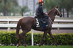 SHA TIN,HONG KONG-APRIL 29: Ertijaal,trained by Mike de Kock,exercises in preparation for the Champions Mile at Sha Tin Racecourse on April 29,2016 in Sha Tin,New Territories,Hong Kong (Photo by Kaz Ishida/Eclipse Sportswire/Getty Images)