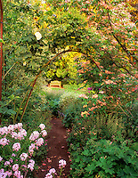 Path with dogwood, rose vine and bench.  Bellevue Botanical Garden,  Bellevue, Washington