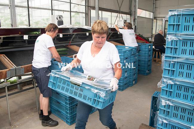 't Loo 060821 - Foto Ruben Meijerink / APA FOTO<br /> Maatschap Wilting-Arentz, een groente- en fruitkwekerij in Loo. <br /> Werknemers in actie