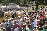 Royal Show crowd. Charolais.