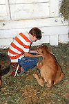 Young boy tending newborn calf at Cheshire Fair in Swanzey, New Hampshire USA