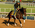 October 29, 2019 : Breeders' Cup Distaff entrant Elate, trained by William I. Mott, exercises in preparation for the Breeders' Cup World Championships at Santa Anita Park in Arcadia, California on October 29, 2019. John Voorhees/Eclipse Sportswire/Breeders' Cup/CSM