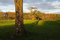 Parkland trees in autumn colours, Leagram, Chipping, Lancashire.