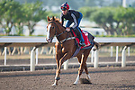 SHA TIN,HONG KONG-DECEMBER 08 : Robin of Navan,trained by Harry Dunlop,exercises in preparation for the Hong Kong  at Sha Tin Racecourse on December 8,2017 in Sha Tin,New Territories,Hong Kong (Photo by Kaz Ishida/Eclipse Sportswire/Getty Images)