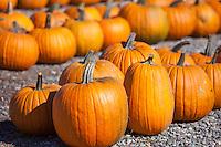 Pumpkins ready for Halloween at an outdoor market.