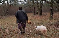 """Europe/France/Midi-Pyrénées/46/Lot/Causse de Limogne/Lalbenque: Marthe Delon lors d'un cavage avec son cochon truffier """"Kiki"""" - AUTORISATION N°257"""