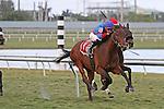 #11 Whispering with jockey Joseph Rocco, Jr on board breaks her maiden at  Gulfstream Park, Hallandale Beach, Florida 01-25-2014